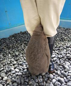 大阪・海遊館のオウサマペンギンの赤ちゃんがもふもふ可愛い件
