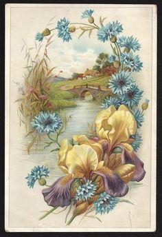 AntiqueVictorian Embossed Paper Card German Print CottageStreamIris Flowers