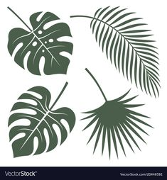 Silhouettes vector of tropical leaves. Monstera, coconut palm and fan palm. Leaf Stencil, Stencils, Stencil Designs, Paint Designs, Nail Art Fleur, Systems Art, Leaf Outline, Leaf Silhouette, Leaf Drawing