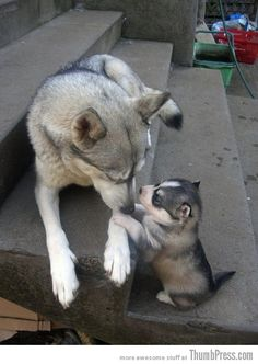 """""""Mom, they called me husky.."""" - Imgur"""