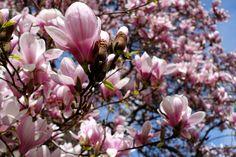 Frühling / The awakening Awakening, Explore, Plants, Plant, Planting, Planets