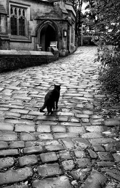 """cemetery with black cats 