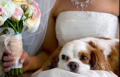 engagement pictures with dog | Wedding Dog Sitter: matrimonio a quattro zampe