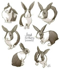bunny drawings - Google Search by purpledreams