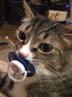 cat adoption team sherwood