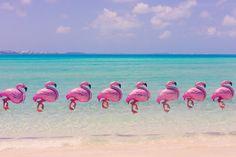 Grey Malin's Bermuda Flamingos