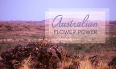 Flower Power: The Natural Magic Of Australian Botanical Essences