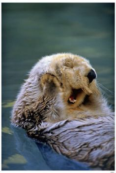Sea otter-inspired jewelry. Click on the picture to read the article.