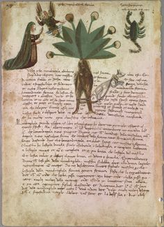 Mandragora, Female, 1475-1525, Italian Herbal, TR F Herbal, Special Collections, University of Vermont Library, P.72