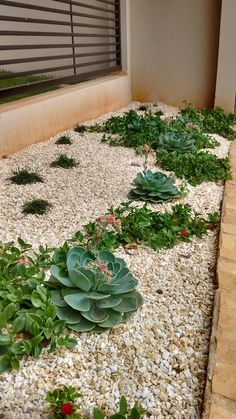 Garden, Paisagismo, Suculentas.