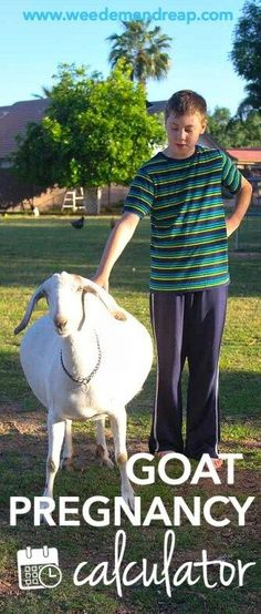 Goat Pregnancy Calculator    Weed 'Em and Reap