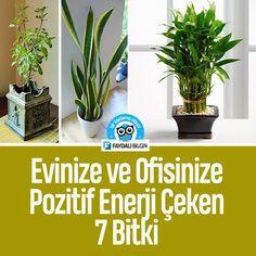 Evinize ve Ofisinize Pozitif Enerji çeken 7 Bitki - Faydalı Bilgin