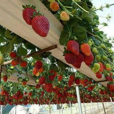 Cool greenhouse idea, great recycle of gutters. Could also just stack these…