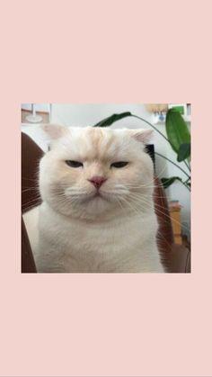 cute cat wallpaper tui nhe moi nguoi, cre : su tm n t t Wallpaper Gatos, Tier Wallpaper, Cute Cat Wallpaper, Mood Wallpaper, Iphone Background Wallpaper, Aesthetic Pastel Wallpaper, Locked Wallpaper, Animal Wallpaper, Aesthetic Wallpapers
