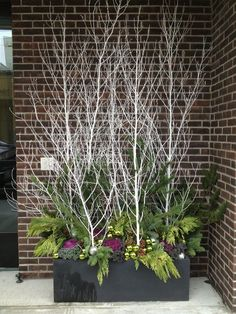 Sticks and twigs can be a thrifty source of drama for a container garden. Never tried container gardening in winter before? Well, you're missing out on a lot! Read our article to find the best winter container garden ideas. Christmas Urns, Outdoor Christmas Decorations, Winter Christmas, Christmas Branches, Christmas Things, Christmas Garden, Elegant Christmas Decor, Outside Decorations, Christmas Vacation