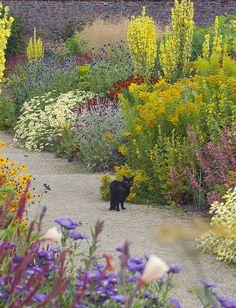 Helmsley Walled Garden - the garden cat strolling through hot summer borders by Jacky Hobbs