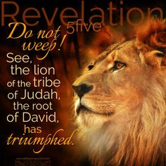 """Do not weep! See, the lion of the tribe of Judah, the root of David, has triumphed."" Rev 5:5 <3:"