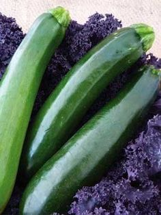 Organic Black Beauty Zucchini Squash 1 LB 4000 seeds *** You can find out more details at the link of the image.