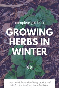 Everyone should be growing herbs. But what do you do with them in winter? This guide will answer alllll your questions about growing herbs in winter. Some you didn't even know to ask! #herbs #howtogrowherbs #overwintering #herbsinwinter #gardening #herbgardening