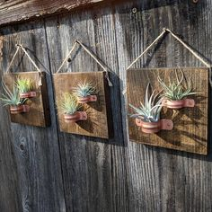 Hanging air plant plaques with copper holders (Three plaques each containing two plants) Your custom order will include: • 6 carefully selected healthy air plants • 3 5.5x5.5 inch stained hardwood plaques with 2 copper holders on each for hanging your air plants • Securely attached