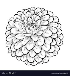dahlia drawing of - Search Yahoo Image Search Results Wallpaper Rainbow, Wallpaper Wall, Flower Art Drawing, Flower Sketches, Flower Outline, Desenho Tattoo, Flower Coloring Pages, Free Art Prints, Flower Clipart