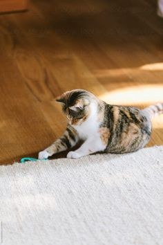 Like A Cat, Living Room Flooring, Hair Band, Stock Photos, Cats, Animals, Gatos, Animales, Animaux