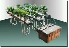 #AquaponicsCycle  #NummularEczema Hydroponic Farming, Aquaponics Diy, Hydroponics System, Indoor Farming, Permaculture, Growing Grapes, Growing Plants, Cannabis, Grapevine Growing