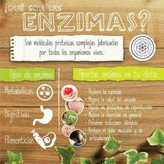 Que son las enzimas