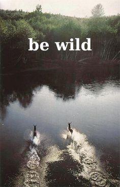 be wild, running deer