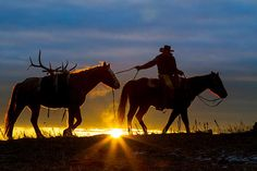 Returning Home (Inge Johnsson on fineartamerica.com) -- Cowboy and his horses at sunrise on a ranch in northeastern Wyoming, in the Black Hills.