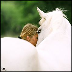 Lipizzan Mare (photographer Lynn R)-this is my old mare Imperia during the brief time she was in Texas