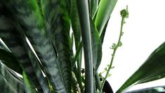 snake plant--apparently eats carbon dioxide during the day and poops oxygen at night, doesn't need much light or water...