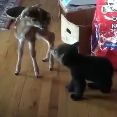 chen u Rehkitz kommen sich näher You are in the right place about Cutest Baby Animals videos Here Cute Little Animals, Cute Funny Animals, Cute Dogs, Cute Animal Videos, Funny Animal Pictures, Logo Pictures, Animal Pics, Baby Pictures, Tier Fotos