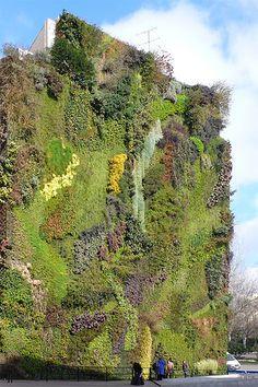 growing wall by Herzog & de Meuron