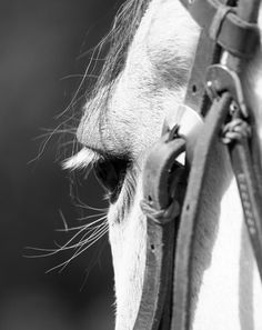 IMG_5039bkwh by Heartful - 800 Horses Photo Contest