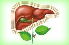 Лечение печени и желчного пузыря народными средствами — Здоровое Долголетие