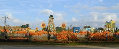 Pumpkin Land at Linvilla Orchards in Media, PA, and one of the last working farms in the Delaware Valley.