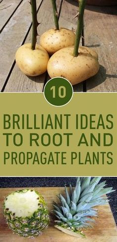 10 Brilliant Ideas To Root and Propagate Plants - You can propagate your garden plants by regrowing their seeds, bulbs, cuttings, or other parts of them. Plant Cuttings, Propagation, Growing Vegetables, Growing Plants, Outdoor Plants, Garden Plants, Fruit Garden, Vegetable Garden, Plants You Can Regrow