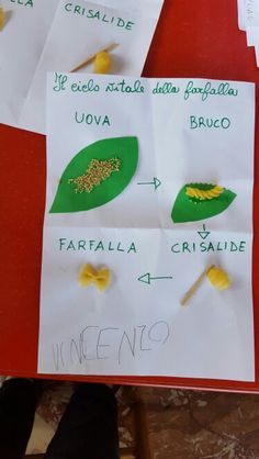 Il ciclo vitale della farfalla Teaching Science, Science For Kids, Art For Kids, Activities For Kids, Crafts For Kids, Spring Art Projects, Spring Crafts, Projects To Try, Reggio Children