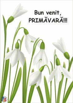 Diy Christmas Cards, Spring Activities, Decoration, Pictures, Plants, Decor, Photos, Decorations, Plant