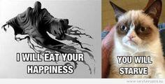 Grumpy cat + Harry Potter