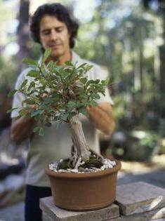 How to Make an Oak Bonsai Tree