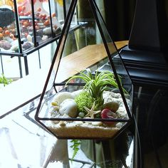 ► Production time is 2 weeks, before shipping. ◄  This elegant handmade terrarium is the perfect size for an end table or window sill. It is about 8 high by 4 3/4 at the widest part. Its made from double strength glass which I cut by hand. The edges are ground smooth and copper foiled, then assembled and soldered. The final steps are to patina and wax the terrarium. One of the sides is open for easy access and to give the air plant ventilation. The plant shown has sold, you will receive ...