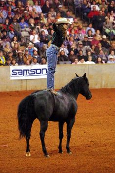 Stacy Westfall, bridleless bareback reining champion