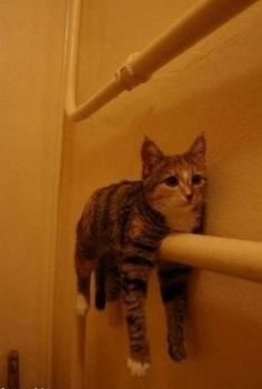 Monorail Cat is undergoing maintenance. We apologize for the inconvenience.