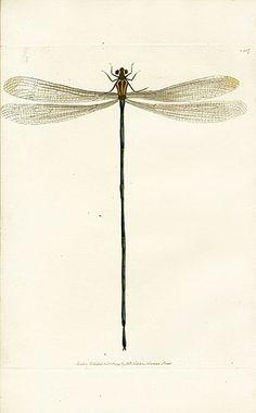 love dragonflies #ad