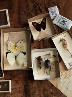 butterfly & insect collection