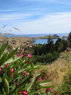 Rhodos – die Sonneninsel – Liebeskorn Plants, Island, Acropolis, Rhodes, Old Town, Travel Report, Sun, Flora