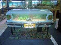 Old Falcon turned into an amazing fish tank