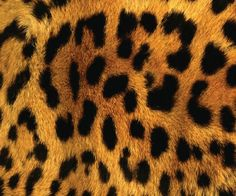 Shop Leopard Body Fur Skin Case Cover created by CaseDesign. Patterns In Nature, Textures Patterns, Print Patterns, Animal Print Wallpaper, Leopard Wallpaper, Safari Animals, Outdoor Art, Animal Tattoos, Cheetah Print